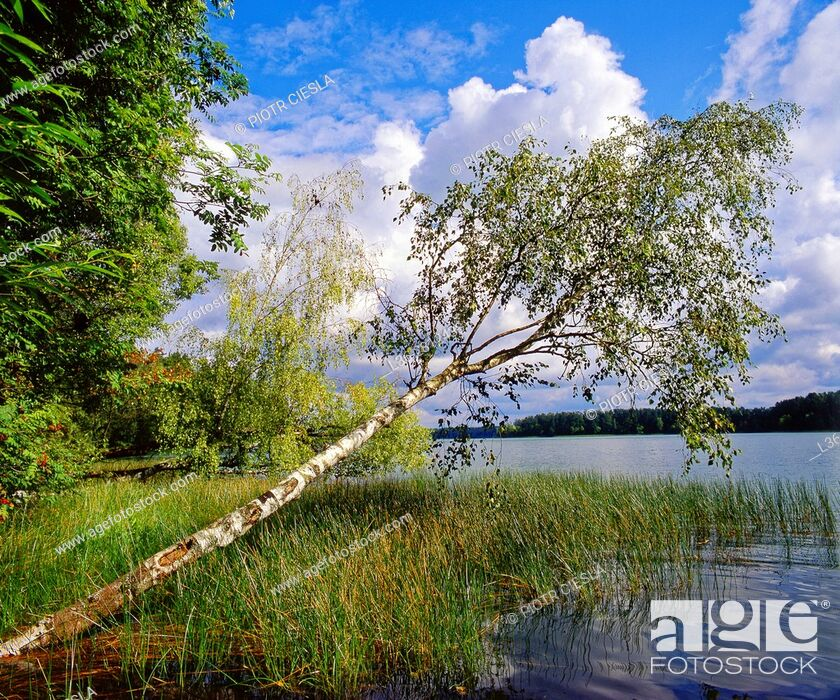 Stock Photo: Poland Suwalski region. Serwy Lake.