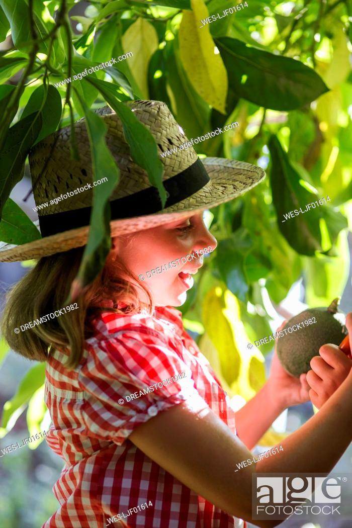 Imagen: Smiling girl picking avocado in garden.