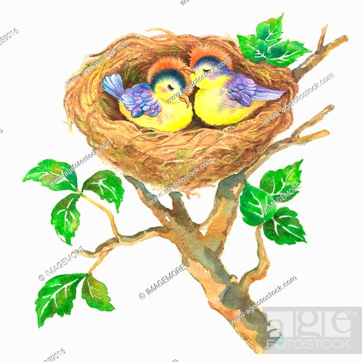 Stock Photo: Animal, Watercolor painting of two birds sleeping in the nest.