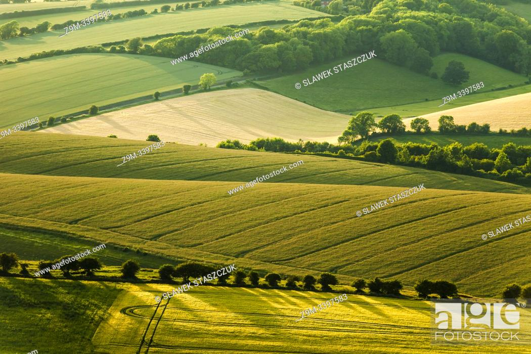 Stock Photo: Summer in South Downs National Park, West Sussex, England.