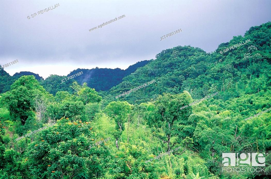 Stock Photo: Jamaica, Montego Bay, Cockpit country, landscape.