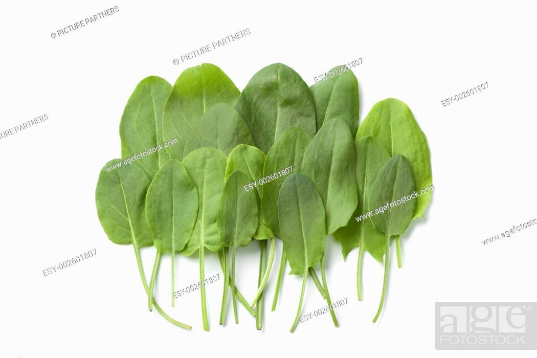 Photo de stock: Fresh sorrel leaves on white background.