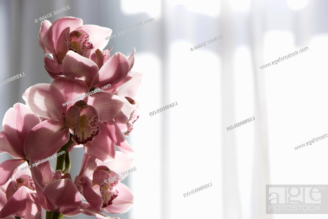 Stock Photo: Orchid flowers.