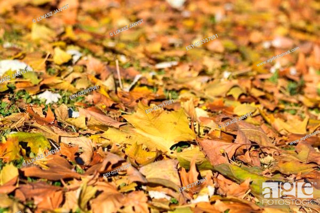 Stock Photo: City park in autumn, getafe, madrid.