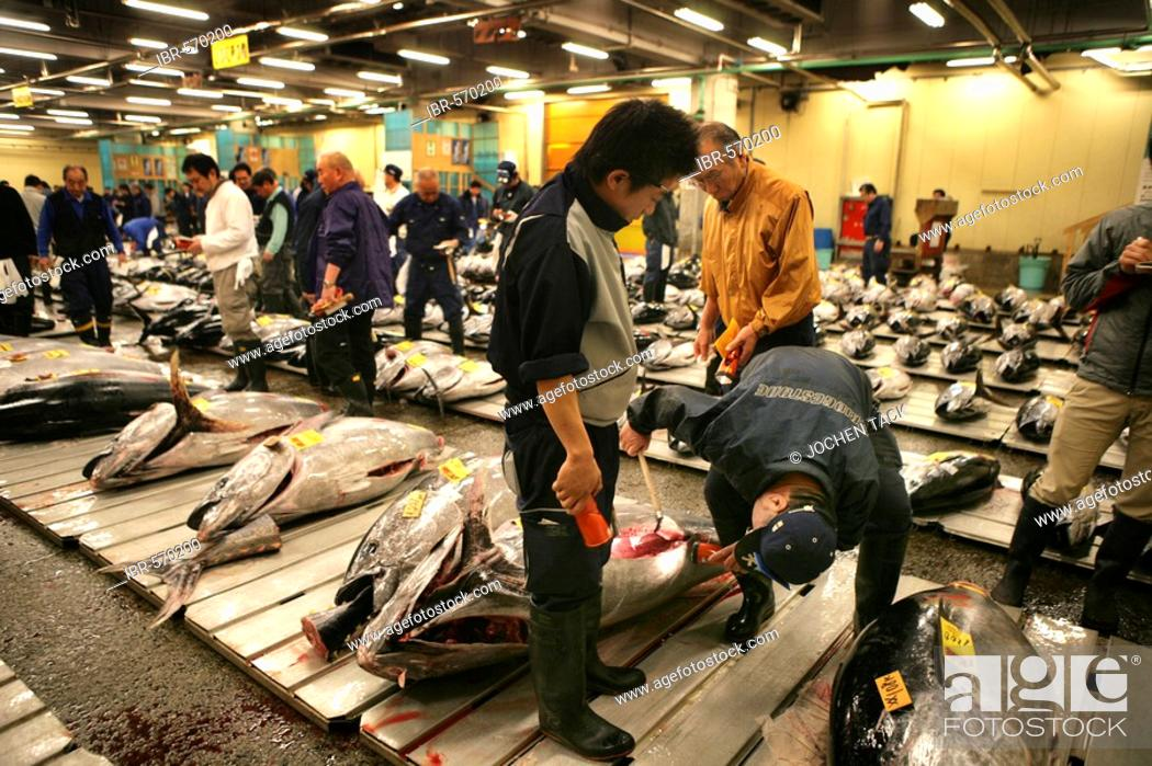 Stock Photo: World largest fish wohlesale market Tsukiji Auction of fresh and frozen tuna fish Tokyo Japan.
