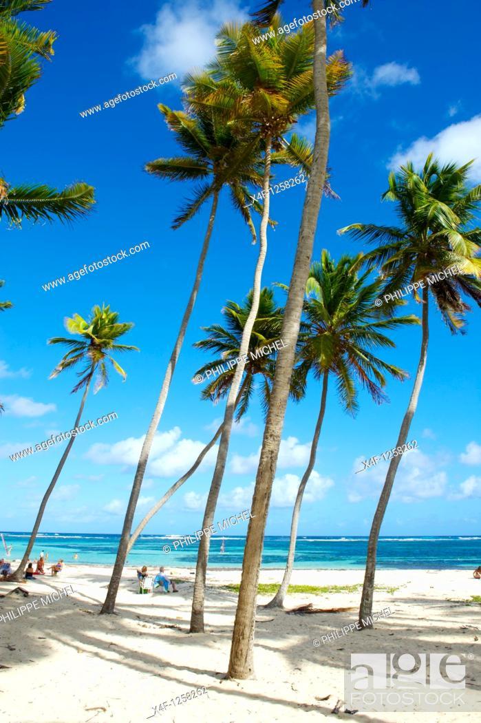 Stock Photo: France, Martinique, Cap Chevalier, Anse Michel beach.