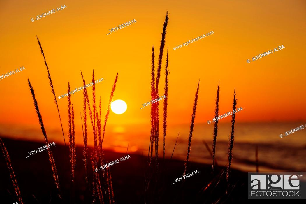 Stock Photo: Beach at sunrise, Marbella. Malaga province. Costa del Sol, Andalusia Southern Spain. Europe.