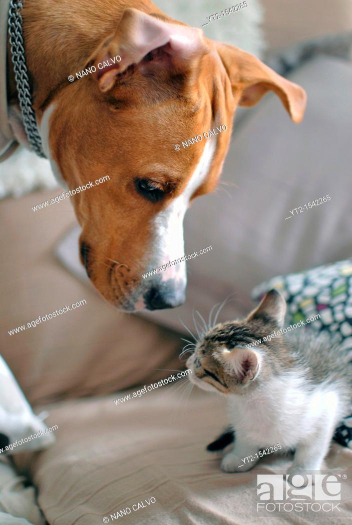 Stock Photo: Few weeks old kitten interacting with dog.