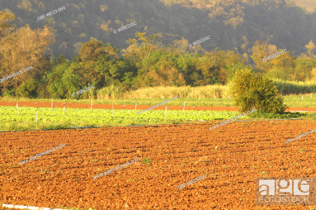 Stock Photo: Plantations, agriculture, Brazil.