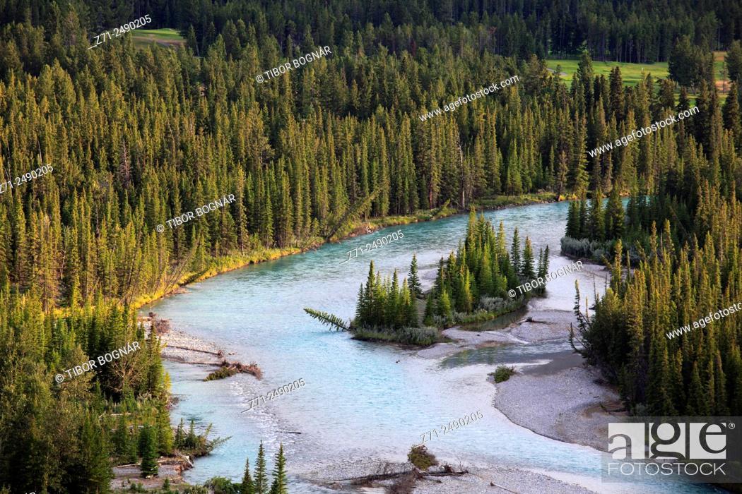 Imagen: Canada, Alberta, Banff National Park, Bow River, pine forest, .