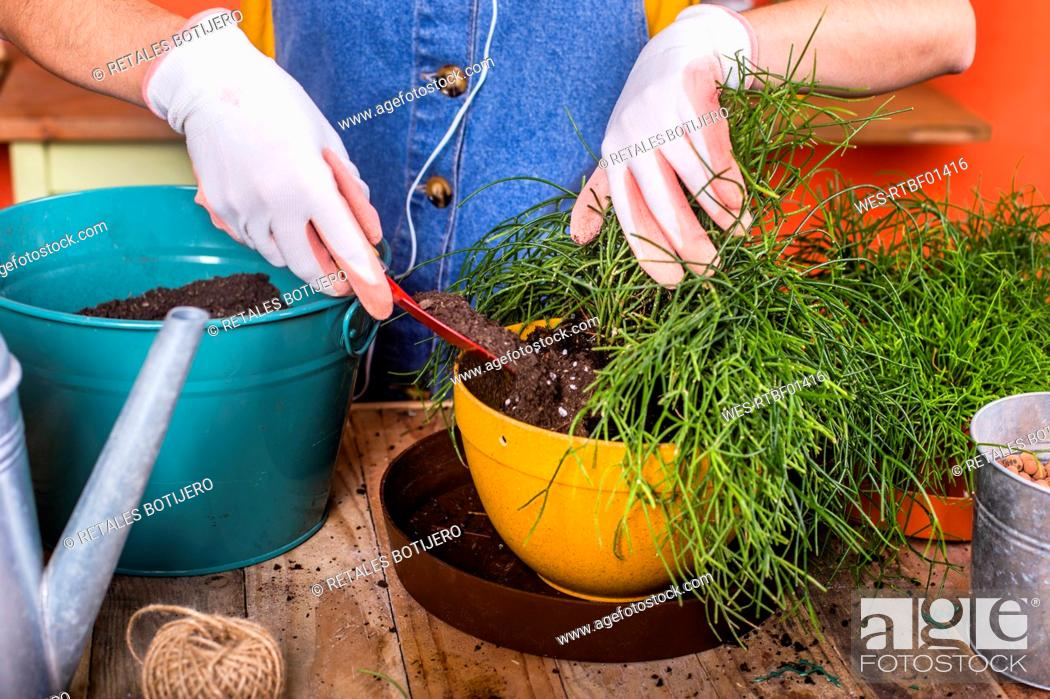 Stock Photo: Close-up of woman repotting Rhipsalis on her terrace.