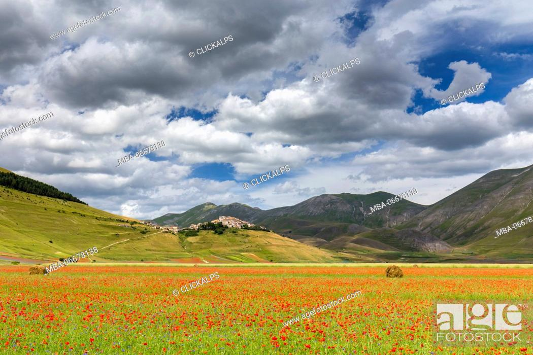 Imagen: Castelluccio town and fields of poppies blooming, Castelluccio di Norcia, Umbria, Italy.