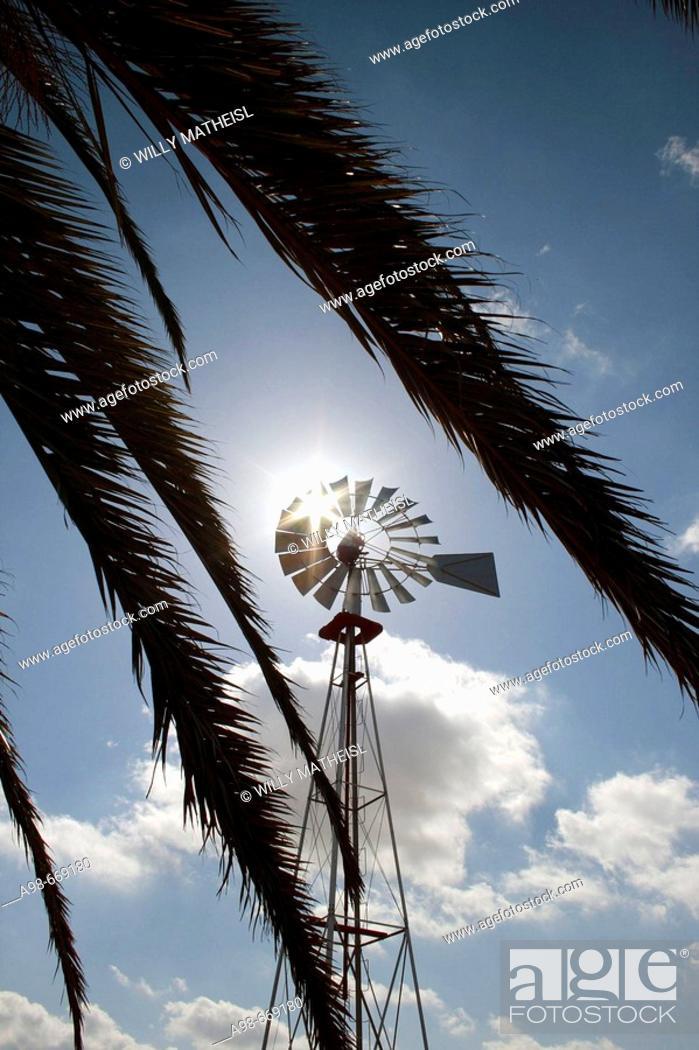 Imagen: windmill and palm tree in Fuerteventura, Spain.