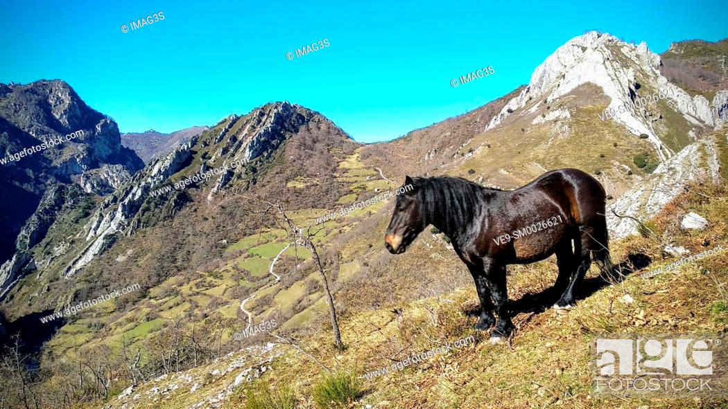 Stock Photo: Horse in Saliencia valley, Somiedo Nature Park and Biosphere Reserve, Asturias, Spain.