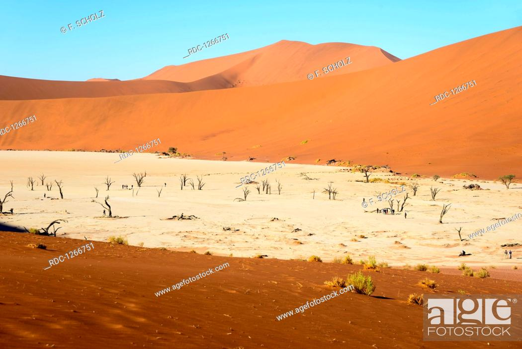 Stock Photo: Dead camel thorn trees, Dead vlei, Namib-Naukluft Park, Namib Desert, Namibia, (Acacia erioloba).
