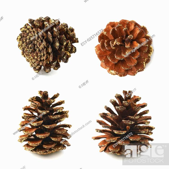 Stock Photo: Single decorational pine cone covered with golden glitter isolated over the white background, set of four different foreshortenings.