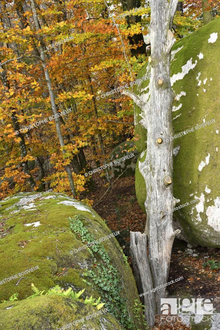 Imagen: France, Tarn, The Sidobre in autumn .