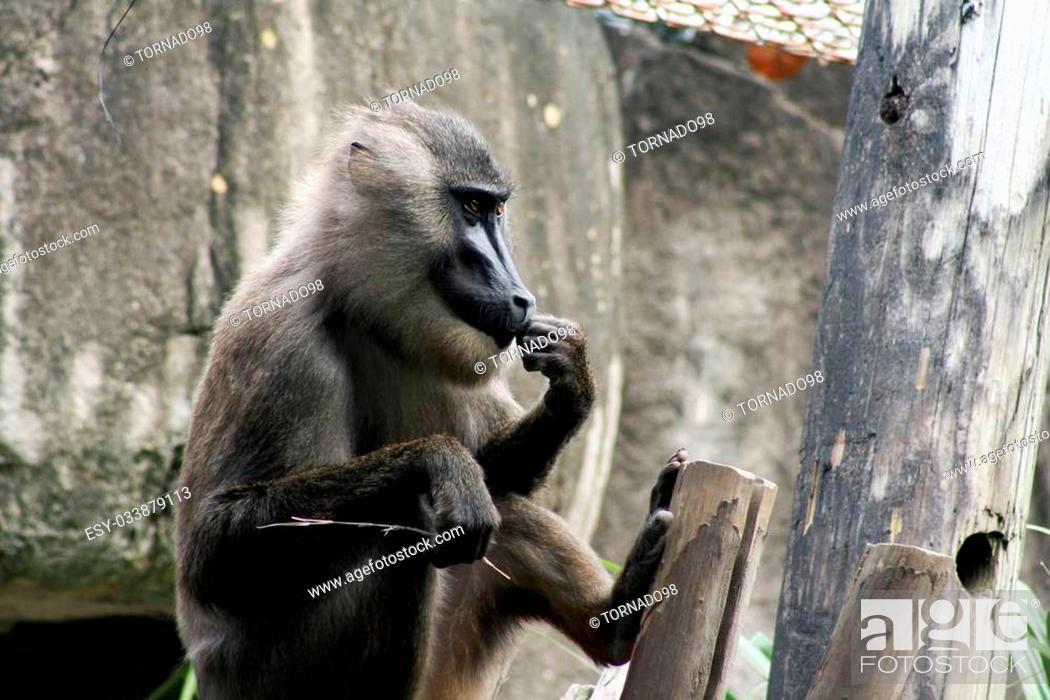 Stock Photo: Baboon sitting in its habitat.