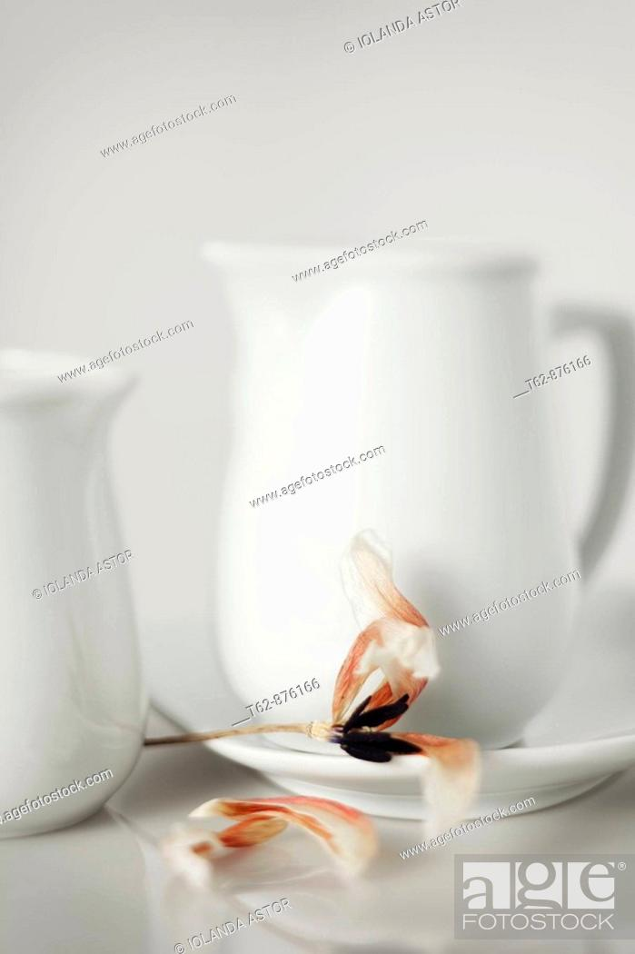 Stock Photo: Two white pitchers and a flower withers  Still Life.