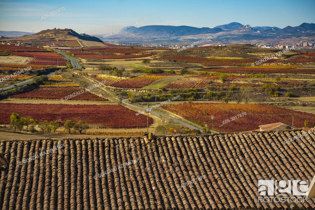 Stock Photo: Vineyards in Autum around Briones village. La Rioja. Spain.