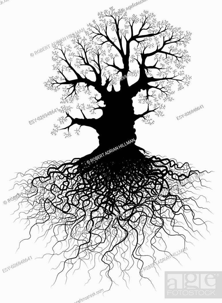 Vector: Editable vector illustration of a leafless oak tree with root system.
