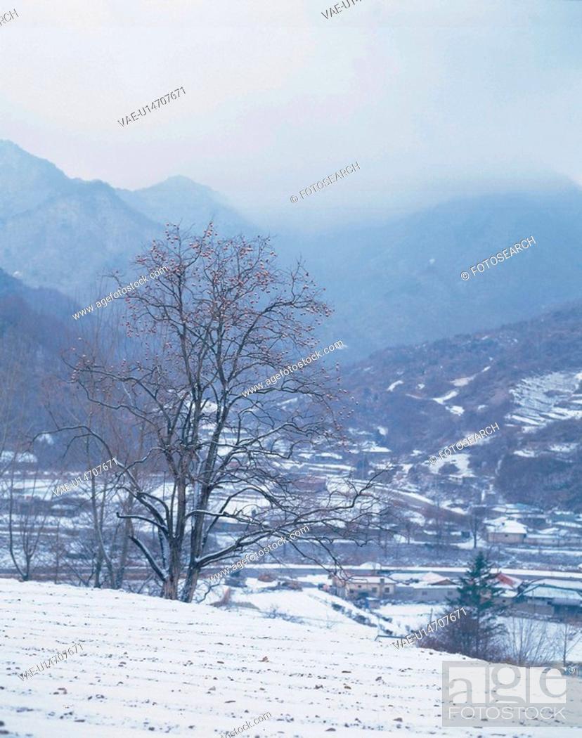 Stock Photo: season, scenery, snow, tree, field, winter, nature.