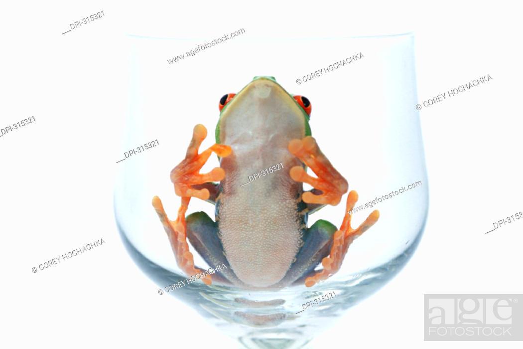 Stock Photo: Frog.