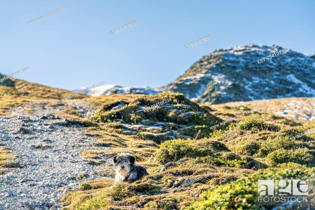 Stock Photo: A black and white dog laying on a gravel path on a mountain hiking path in the austrian Alps near the Kemater Alm and Seejoechl.