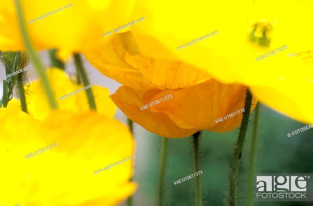 Stock Photo: blossom, background, blooms, bloom, Bernhard, abloom.
