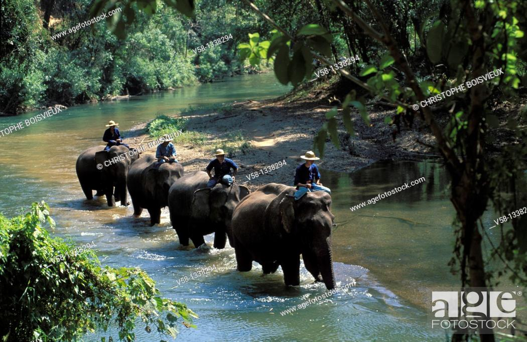 Stock Photo: ELEPHANTS, MAE PING RIVER, CHIANG MAI REGION, THAILAND.