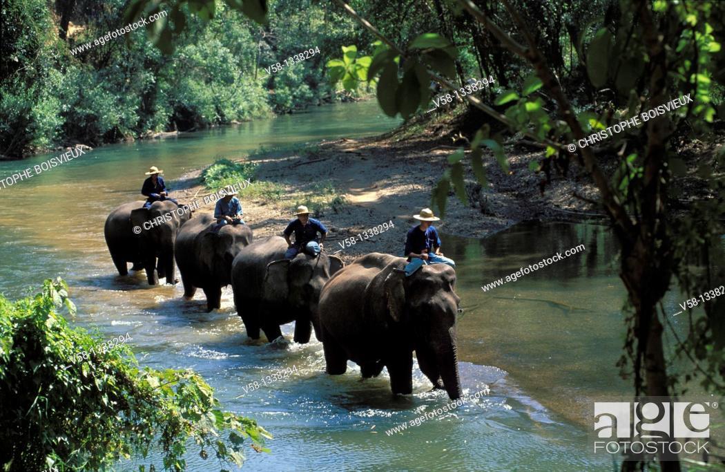 Stock Photo: ELEPHANTS, MAE PING RIVER, CHIANG MAI REGION, THAILAND.
