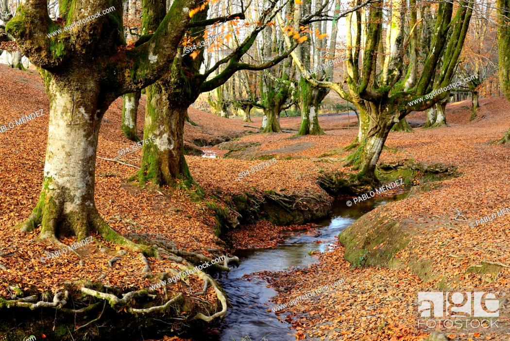 Stock Photo: Beech wood of Otzarreta, Biscay, Basque Country, Spain.