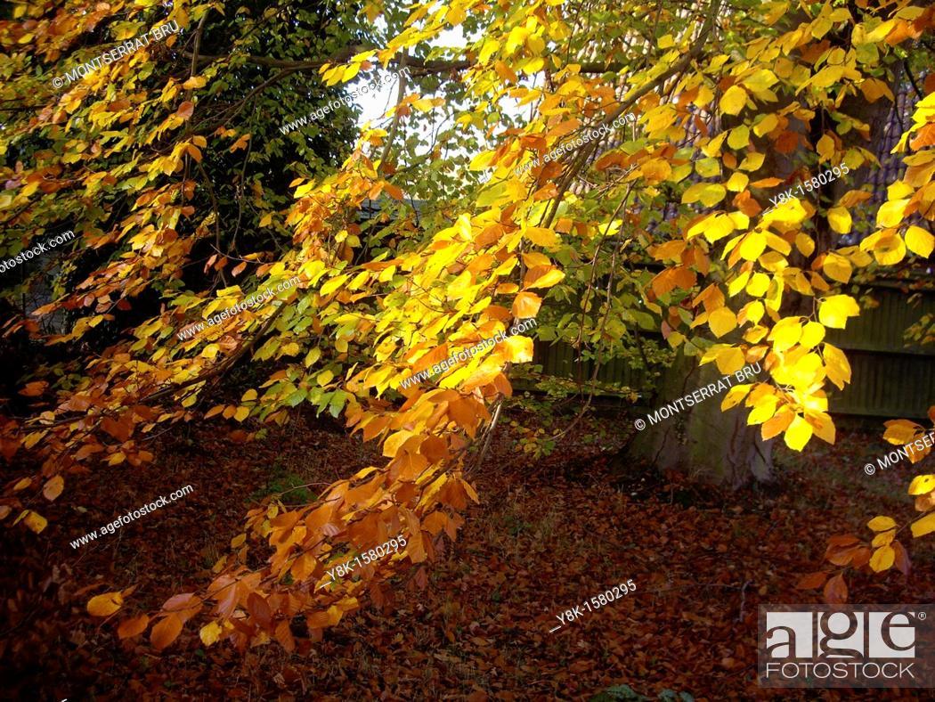 Stock Photo: Autumn country garden.
