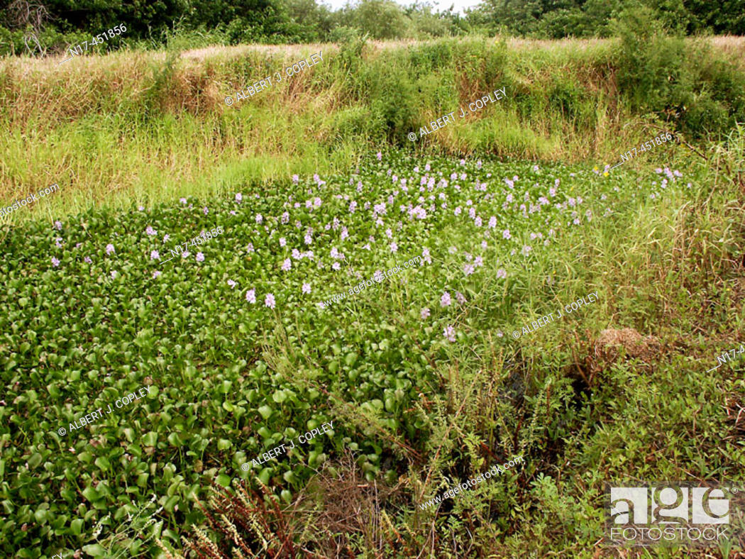 Stock Photo: Florida Everglades.