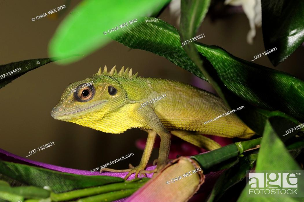 Stock Photo: Chameleon on a vase of artificial flowers.