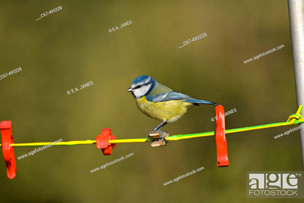 Stock Photo: Common bird.