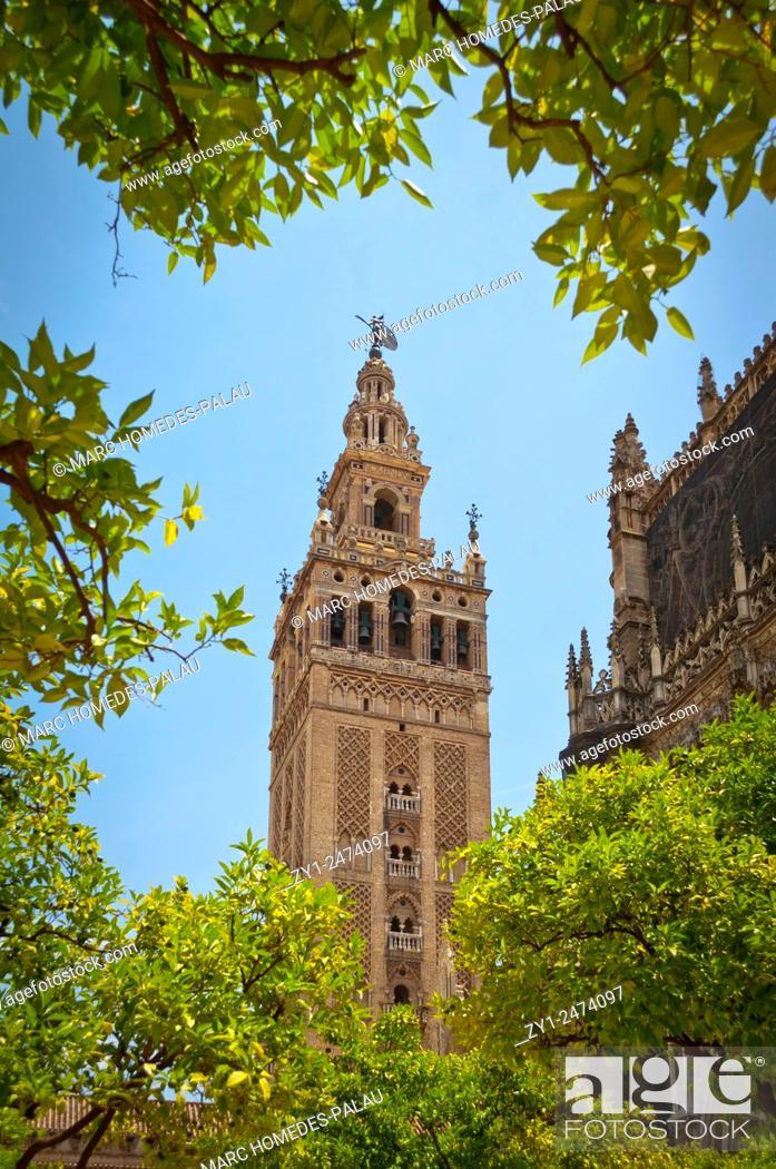 Stock Photo: Patio de los Naranjos in the Cathedral (Seville).