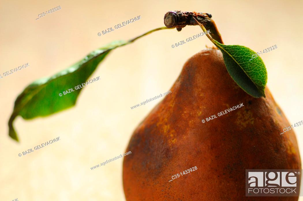 Stock Photo: Leaf of a pear.
