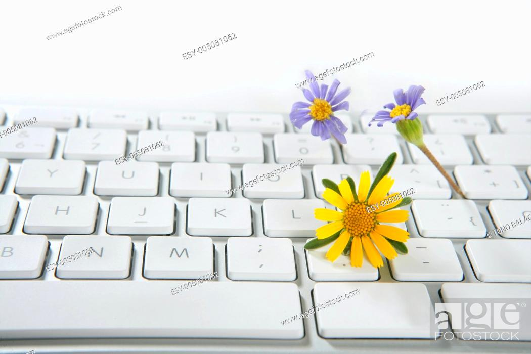 Stock Photo: Concept of flowers growing from computer.