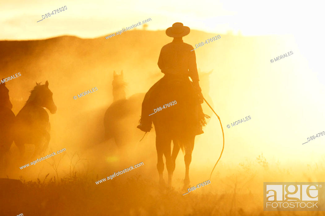 Stock Photo: Cattleman with 'Quarter horse' and/or 'Paint' of USA. Ponderosa Ranch. Seneca. Oregon . USA.