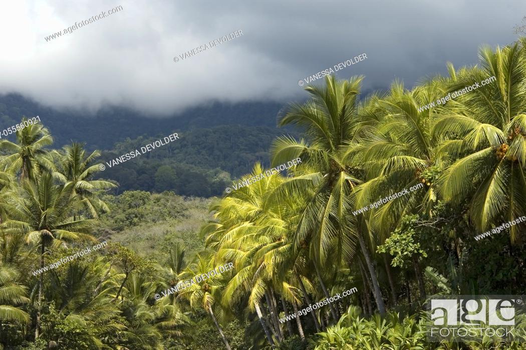 Imagen: Landscape with tropical trees near Playa Ventanas, South Costa Rica.