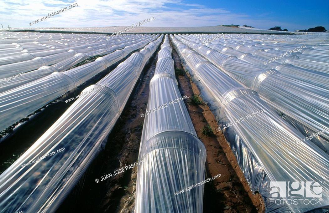 Stock Photo: Strawberry fields, Cartaya. Huelva province, Andalusia, Spain.