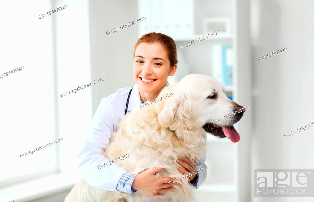Stock Photo: medicine, pet, animals, health care and people concept - happy veterinarian or doctor with golden retriever dog at vet clinic.