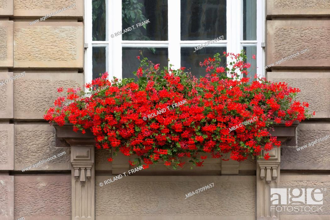 Stock Photo: Speyer, the townhouse in Maximilianstrasse, flower box with geraniums.