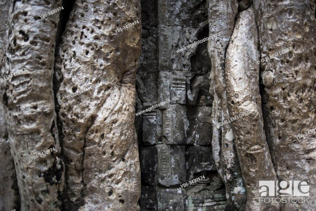 Stock Photo: Detail of bayan tree roots at the Ta Prohm temple in Angkor Wat, Siem Reap, Cambodia.