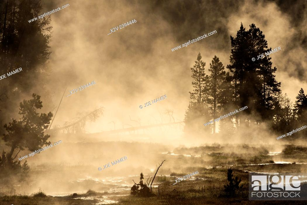 Photo de stock: Steam rises from Tangled Creek in Yellowstone National Park.