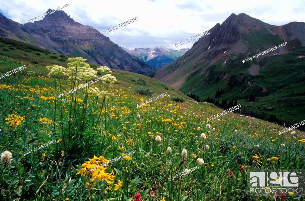 Stock Photo: CO Scenic with Wildflowers at Yankee Boy Basin, Potosi Peak, Mt. Sneffels W.A. Colorado.