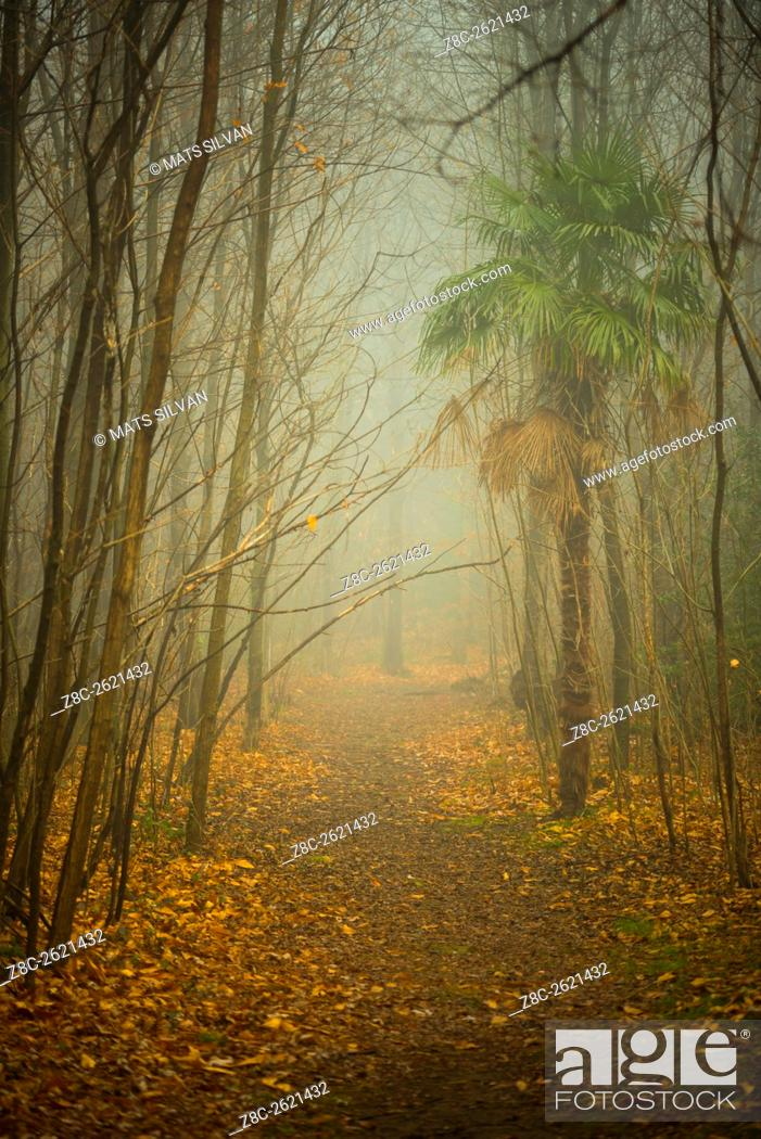 Stock Photo: Foggy path with trees and palm tree in Ticino, Switzerland.