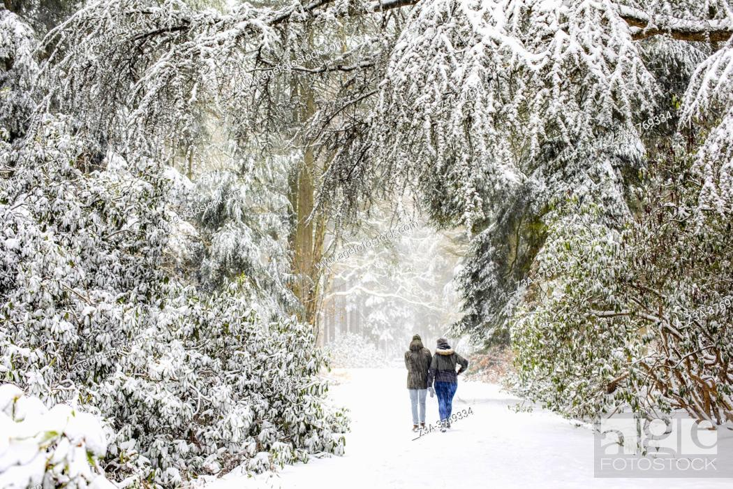 Stock Photo: Couple walking in a winter landscape with snow, Philips de Jongh Park, Eindhoven, The Netherlands, Europe.