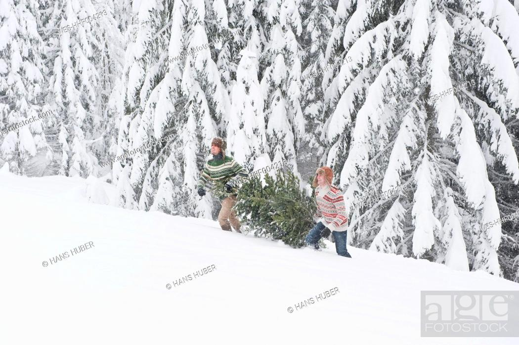 Stock Photo: Austria, Salzburg, Young men carrying christmas tree in winter.
